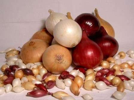 Если вы посадите семена лука, будьте готовы к тому, что по осени вам придется выкапывать корнеплоды самого разного размера.