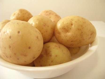 Для того, чтобы корневая система корнеплода получала кислород в достаточном количестве, можно высадить картофель в борозды, которые будут немного возвышаться над грядками. Уход за картофелем сорта Скарб