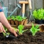 Лунный посевной календарь на 2018 года садовода и огородника