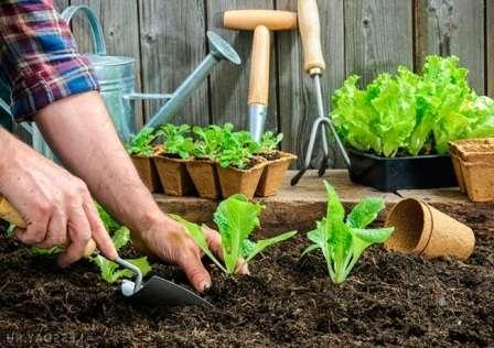 На этой странице сайта о фермерстве вы найдете лунный посевной календарь на 2017 года садовода и огородника, который поможет вам правильно подойти к выбору дней для посадки.