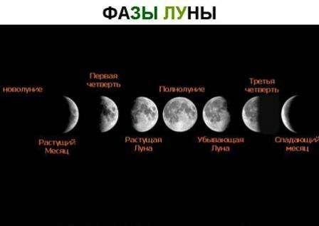 Итак, давайте разбираться, что когда сажать в 2017 году? Что говорит Луна?