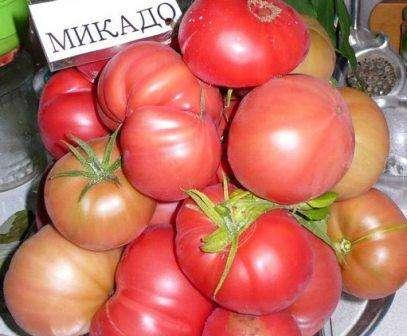 Микадо (80 см / 300 г). Плоды очень мясистые, не склонны к растрескиванию. Даже в самое неблагоприятное лето не даст остаться без урожая.