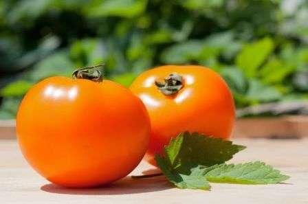 Ищете что-то новенькое для своего земельного участка? Как вам идея посадить желтый томат Хурма? Характеристики и описание сорта содержатся в этой статье нашего сайта о фермерстве и призваны помочь вам с решением.