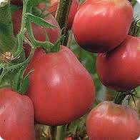 Японский трюфель розовый: кроме цвета плодов, никаких других особых характеристик не имеет. Вкус схож