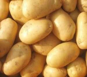 Минерва – это голландский сорт, который считается одним из самых урожайных. Плоды с желтой мякотью и св