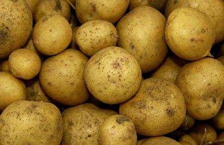 Ривьера – еще один сорт картофеля с желтой мякотью и повышенной урожайностью. Клубни быстро разва