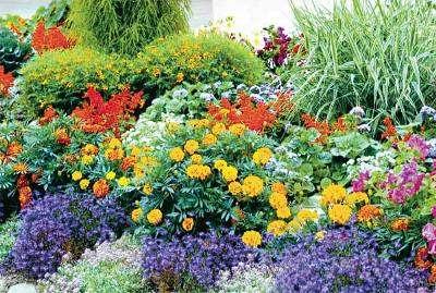 Использование многолетних растений как базы для клумбы очень удобно. Чтобы не раздумывать каждую весну над дизайном и составом цветника, достаточно посадить многолетники и поддерживать их в порядке, вовр