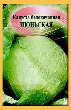 Этот сорт капусты характеризуется периодом созревания около 100 дней, поэтому все чаще дачники выбирают Июньскую капусту для высадки в теплицах и открытом грунте. Кочаны капусты небольшого размер