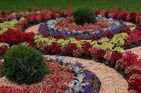 Многоцветные клумбы выглядят ярко и нарядно. Их планируют в виде полос контрастных цветов или создавая орнаменты из разных растений. При этом нужно следить. Чтобы цветы сочетались по форме и раз