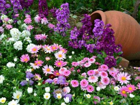 Многолетние цветы для клумбы, цветущие все лето, низкорослые
