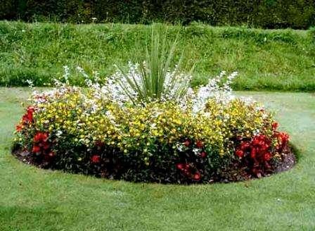 Бархатцы. Существует множество разновидностей этого неприхотливого растения с цветами разной фор