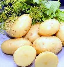 Характеристика картофеля Императрица