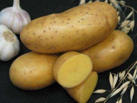 лубни картофеля Императрица имеют овальную форму, тонкую желтую кожуру и желтую мякоть. Этот сорт раннеспелый, а при правильном окучивании в начале лета, вы сможете осенью собрать дополнительный урожай