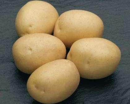 «Мне нравится сорт Наташа устойчивостью к заболеваниям. Из-за повышенной влажности в нашем регионе, большинство овощных культур поражаются вирусами и бактериями, но этот сорт картофеля хорошо им про