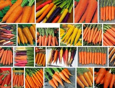 Морковь семена: лучшие сорта, отзывы