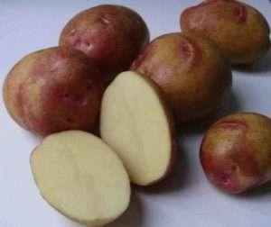 Если вы хотите вырастить картофель для длительного хранения зимой, то сорт Пикассо станет одним из самых лучших. Все дело в том, что он обладает хорошей лежкостью, поэтому не прорастает длительное врем