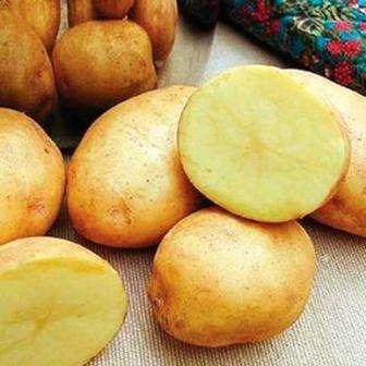 Перед тем как выкапывать картофель Императрица, по отзывам дачников, необходимо скосить ботву. После этого можете выкапывать клубни и разложить их для просушивания. Если планируете длительно хранить карт
