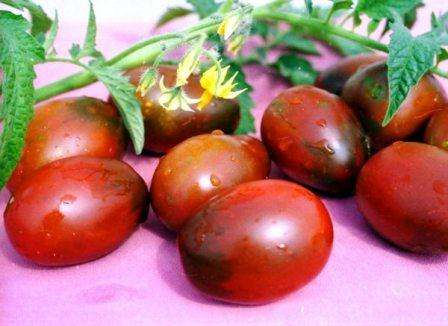 Высокорослые или индетерминантные томаты, естественно, не вырастут сами по себе. Они требуют особенного ухода, если вы хотите получить высокий урожай. Если вы сомневаетесь в потенциале такого вида по