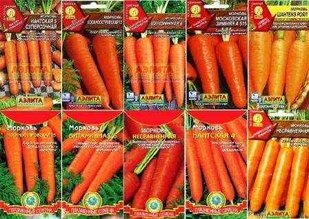Сорта моркови подразделяются на скороспелые, среднеспелые и позднеспелые по сроку созревания. Вы