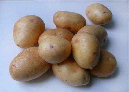Еще одно преимущество Невского картофеля в том, что у него мощная корневая система, благодаря которой этот сорт устойчив к засухе. В сильную жару вы заметите, что листья на кустах немного скручиваются. Не пе