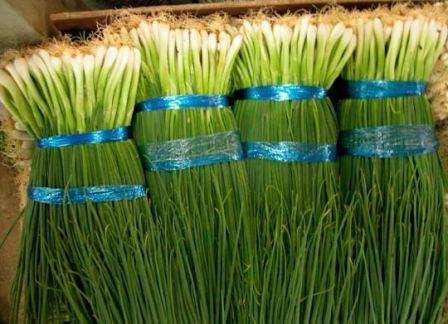 Сорта лука на зелень с фото и описанием