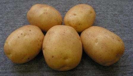 Сорт картофеля Лидер: характеристика, отзывы