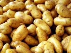 Картофель «Лидер» очень не любит жару. Поэтому летом необходим регулярный полив. Особенно растение нуждается в орошении в период перед и вовремя цветения. Если не обеспечить должного доступа влаги, то клу