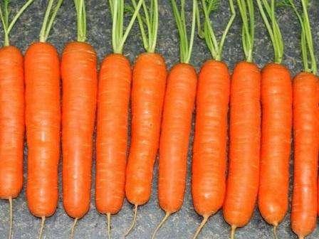 «У нас на участке почва не самая подходящая для высадки морковки – суглинок, достаточно тяжелый. Другие сорта не очень хорошо всходят, а если получается какой-то урожай, то не самый богатый, да и кор
