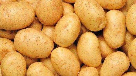 Сорт картофеля «Бриз» по описанию и характеристикам достаточно устойчив к таким видам болезней, как ризоктониоз и чёрная нога. Грибок альтернария является возбудителем альтернариоза клубня. Учитывая сл