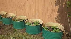 Очевидно, что картошка в емкости не сможет обходиться без питательных веществ. Идеальным для такой культуры может стать грунт, в состав которого входит компост или перегной. Так как картошка будет расти в замкнутом пространстве очень важно, чтобы в бочке с клубнями не оказалось никаких вредных растений и