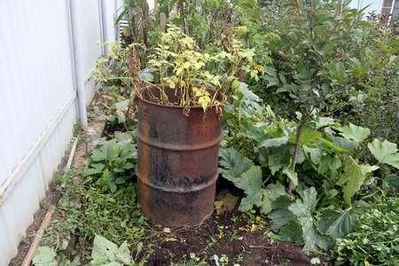 Такой метод хорош тем, что поливать картофель не придется, но следить за уровнем влаги все же необходимо. Сухая земля слегка увлажняется, поэтому сорняки практически не вырастают.  Выращи