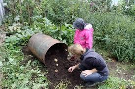 Посадить картошку по данной технологии вполне реально, даже когда не найдется нужно емкости. Просто нужно подобрать свободное в саду место и в нем выкопать специальную яму высотой не больше близко к 40-ка