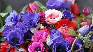 Разобраться в основных особенностях по выращиванию этого цветка будет сложно. Ведь как уже говорилось, у ра