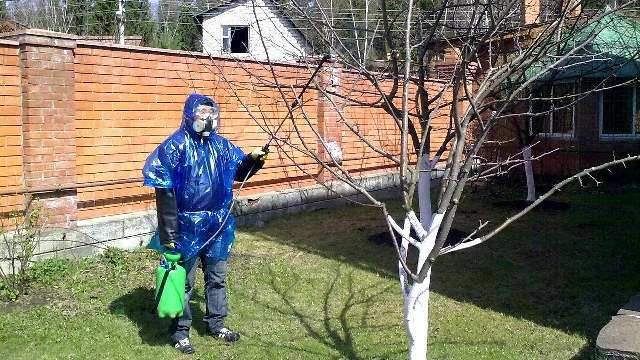 Чем опрыскать сад ранней весной от болезней и вредителей