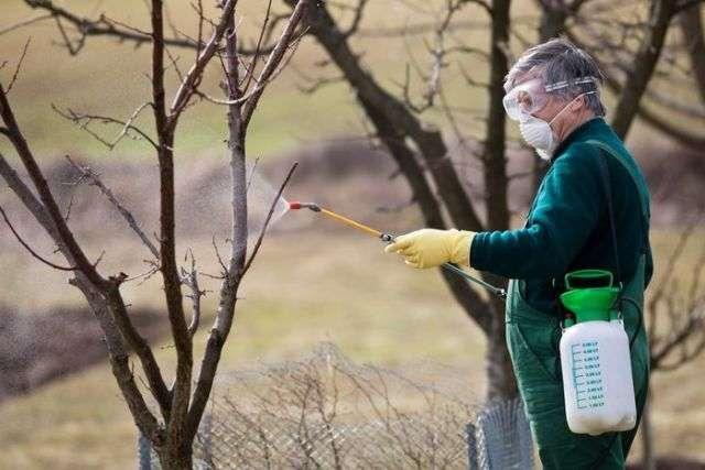 Весенняя обработка сада от вредителей и болезней до распускания почек