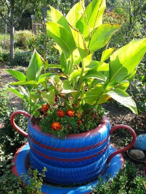 высаживаются растения