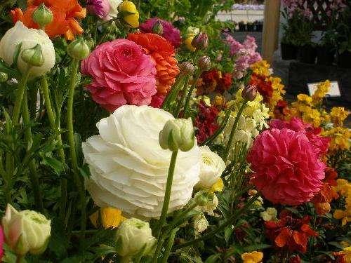 Обеспечение цветения