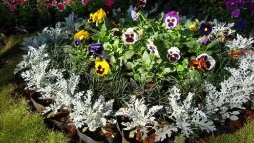 Клумба с однолетними цветами