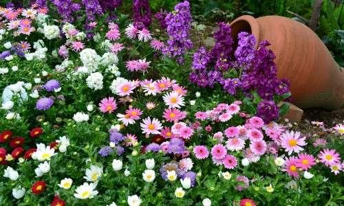 Неприхотливые многолетние цветы для клумбы цветущие все лето