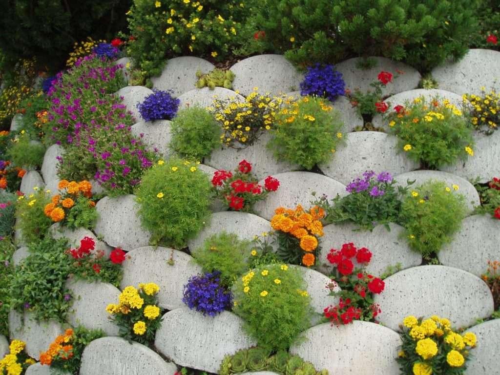 Цветы в камнях