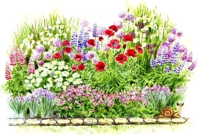 Оригинальные клумбы из низкорослых многолетних цветов