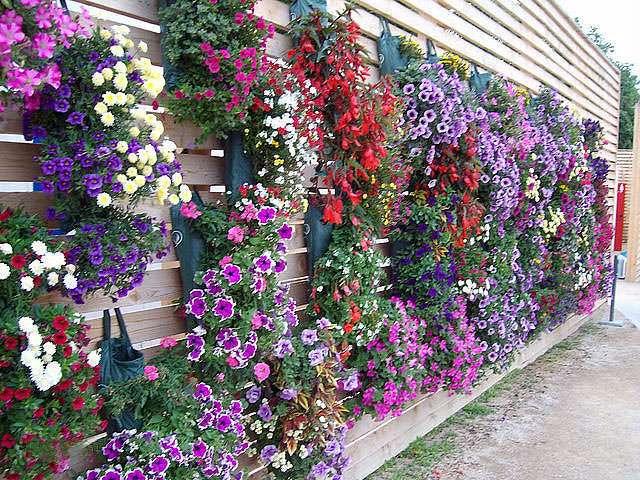 сад огород дача все самое яркое и интересное своими руками