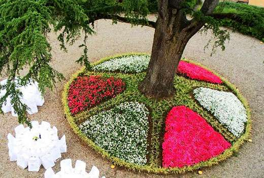 Круговой цветник с деревом в его центре