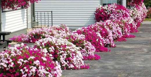 Цветы, высаженные вдоль дорожек