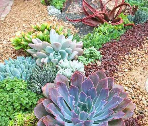 Экзотические цветники в обычном саду
