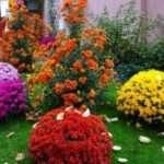 Какие однолетние цветы цветут все лето. Каталог растений с фото и названиями