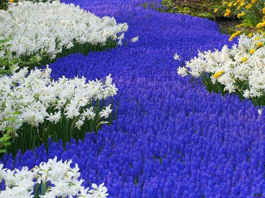 Высаживаем низкорослые многолетние цветочки самостоятельно