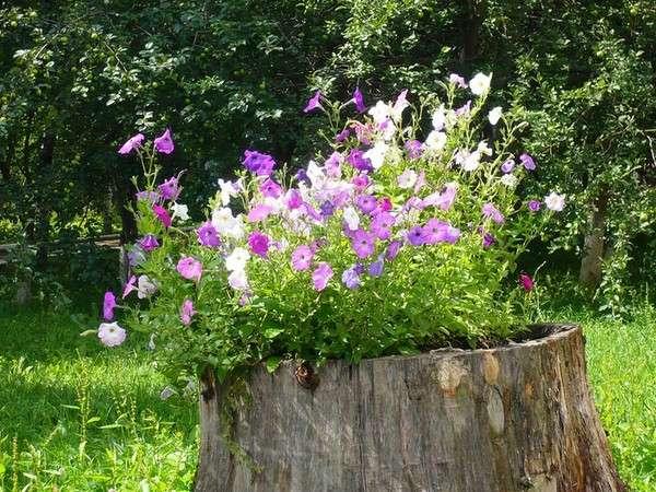 большая цветочная композиция на пне