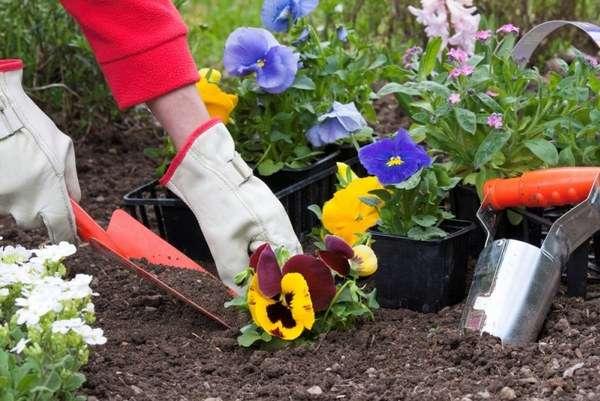 Главные принципы ухода за низкорослыми цветущими растениями