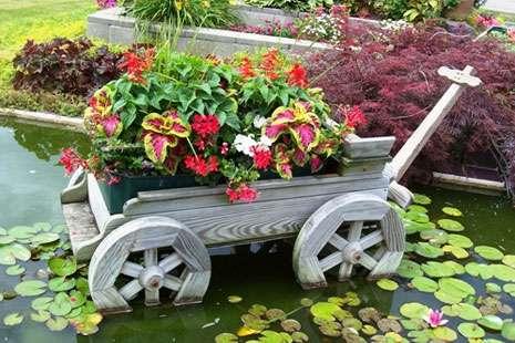 цветник цветущий все лето